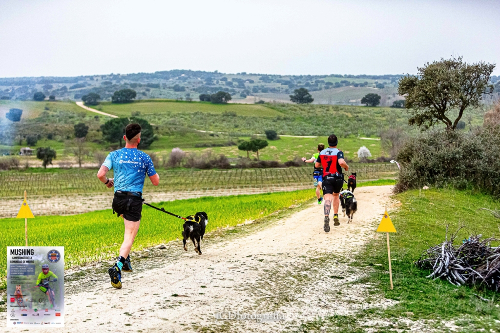Campeonato de Madrid Mushing 2021 . Canicross Villamanta 2021